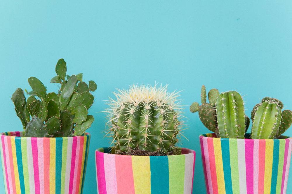 DIY-colorful-tissue-covered-pots