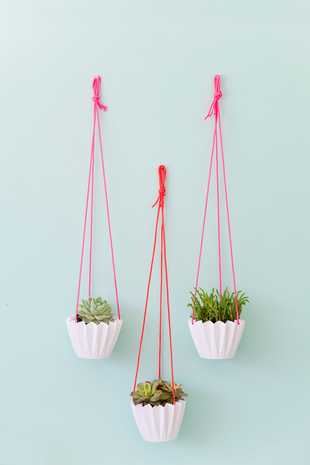 DIY-$5-hanging-plants