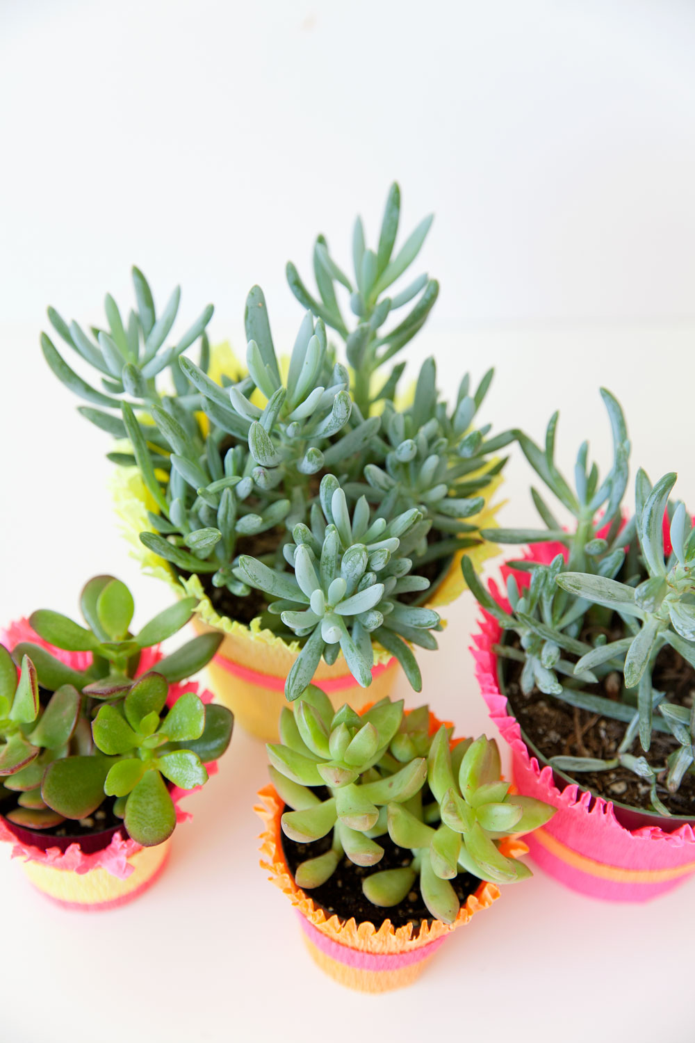 A-fun-and-easy-centerpiece-idea-using-crepe-paper-and-succulents