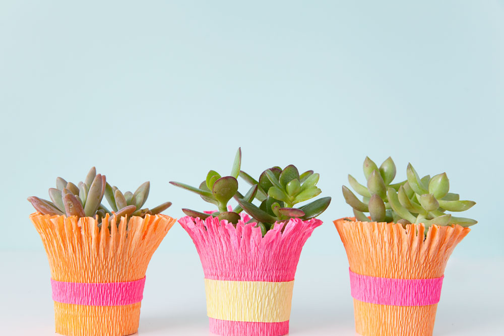 Learn-how-to-make-these-cute-succulents-wrapped-in-crepe-paper